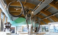Yukon Beringia Interpretive Centre