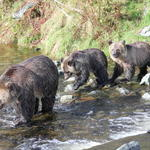 Grizzly Bear Lodge and Safari, Angus Reid