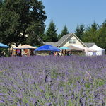 Cowichan Valley Lavender Labyrinth & Farm, Christopher Carruthers